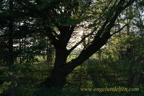 Gedichte Ueber Bäume