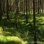 images/gfx/wald/wald_04.jpg